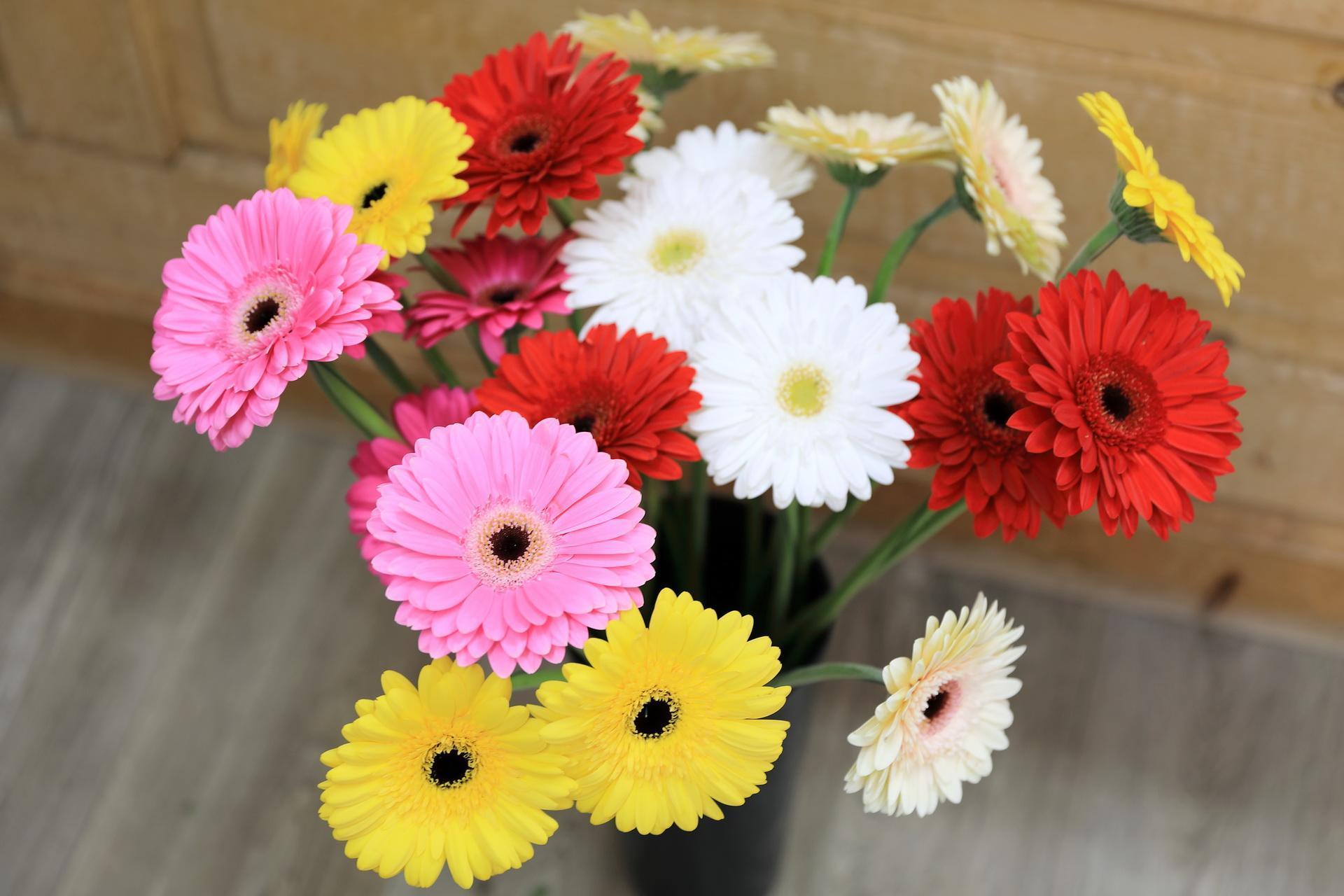 Fleuriste-Leloup-Genval-033.jpg