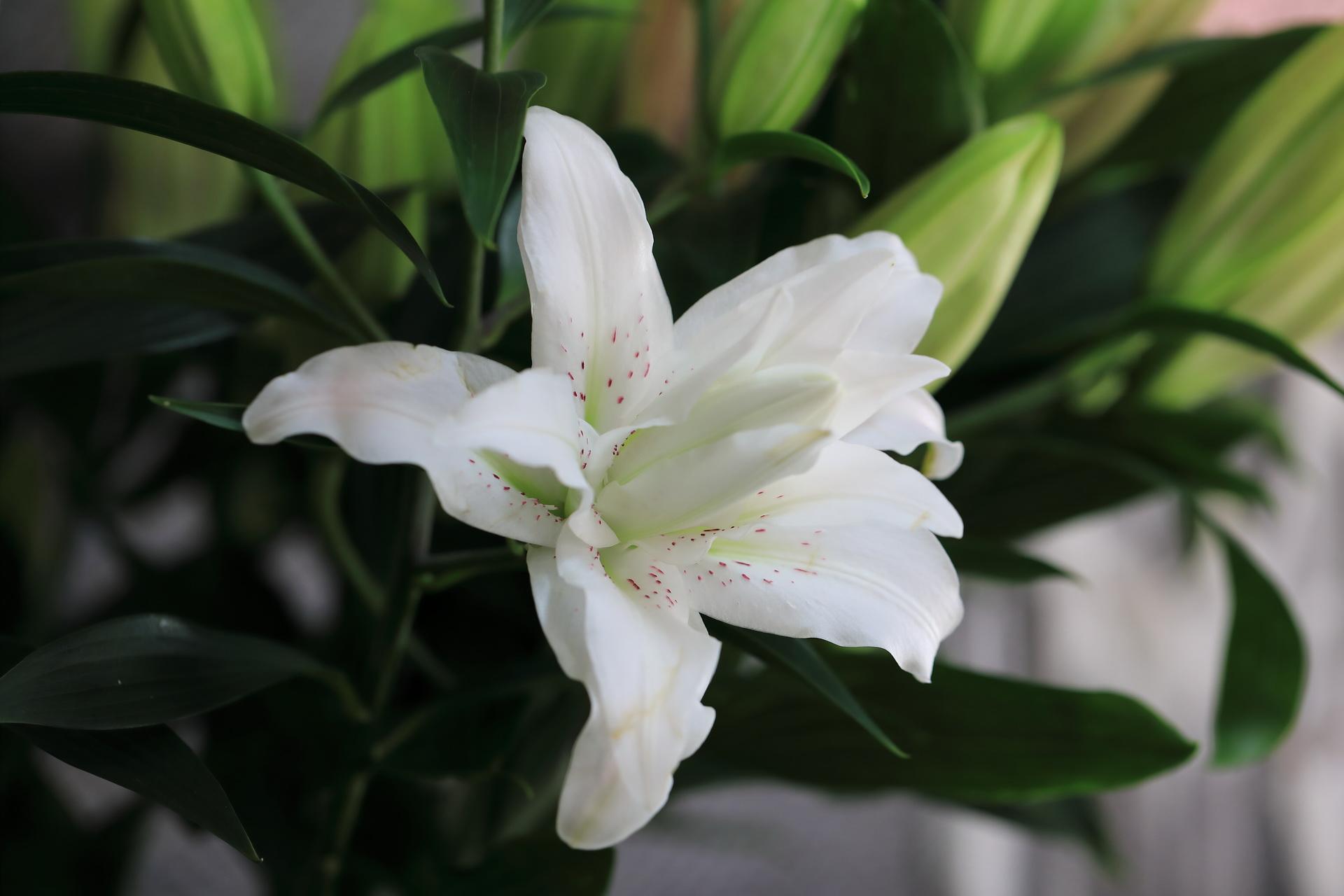 Fleuriste-Leloup-Genval-040.jpg