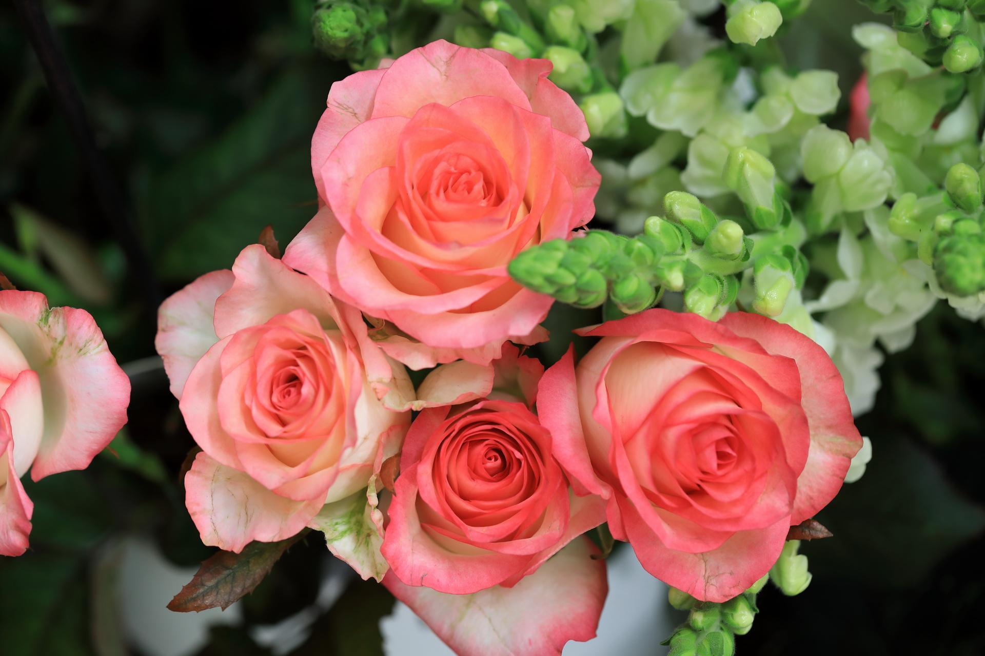 Fleuriste-Leloup-Genval-041.jpg
