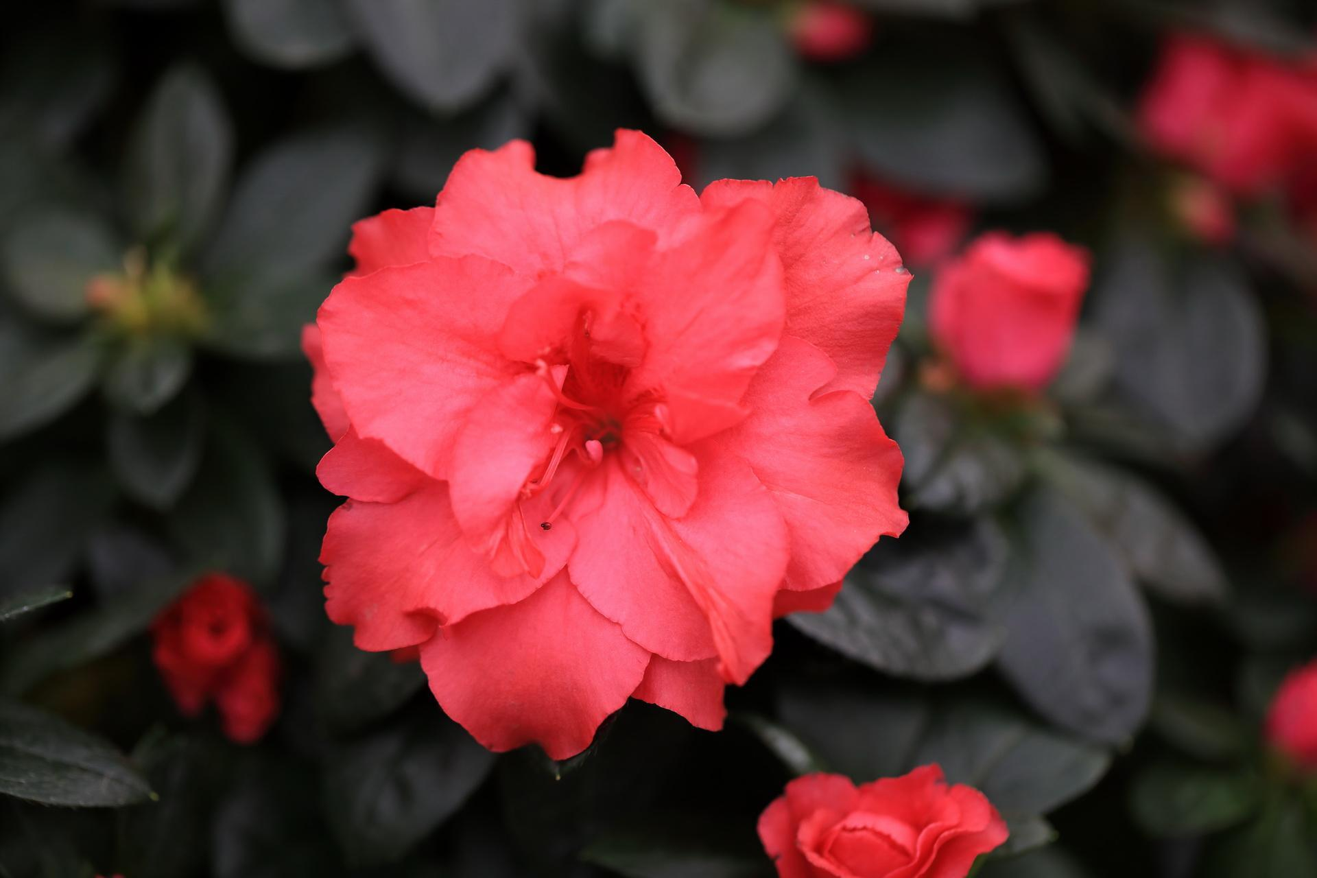 Fleuriste-Leloup-Genval-056.jpg